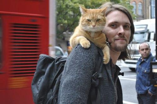 street_cat_bob_James_Bowen